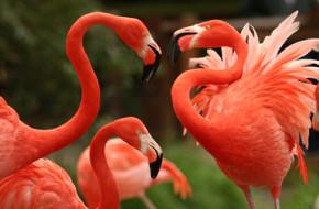 I Net Flamingo