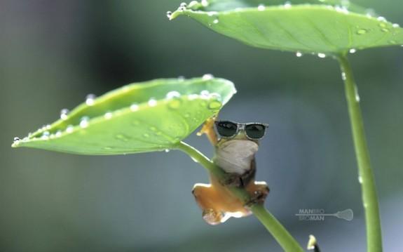 Man Bro Bro Man Sunglasses Photo of the Week