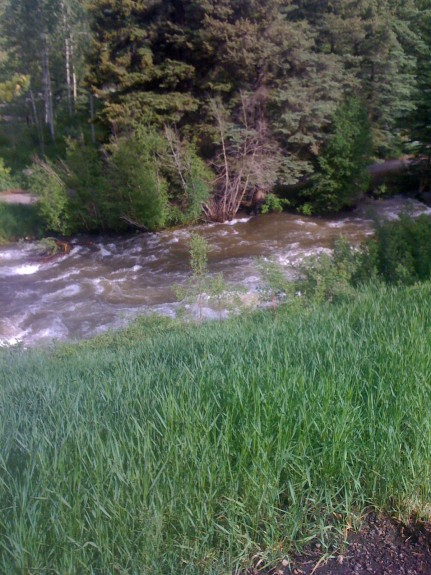 Vail Nature
