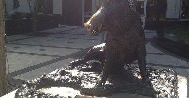 the lucky boar.