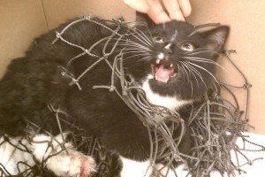 kitten-lacrosse-net