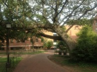 Interesting tree on the campus of Johns Hopkins.